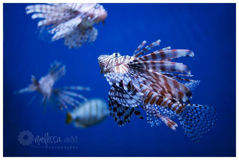 Leesville-New Orleans-Aquarium-Photo