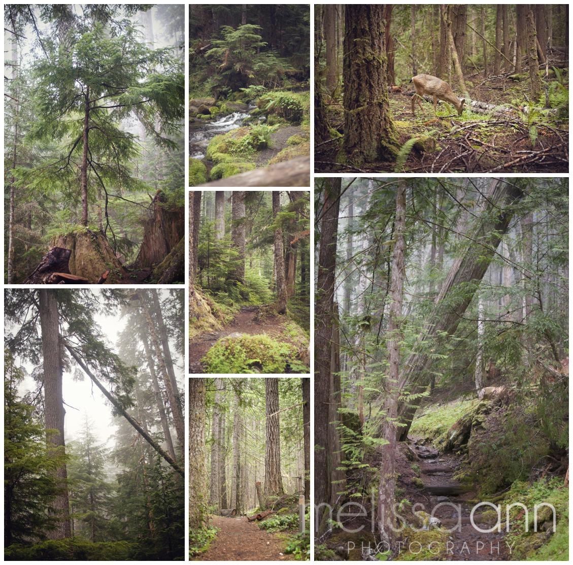Washington-Olympic_National_Forest-Travel-Photo