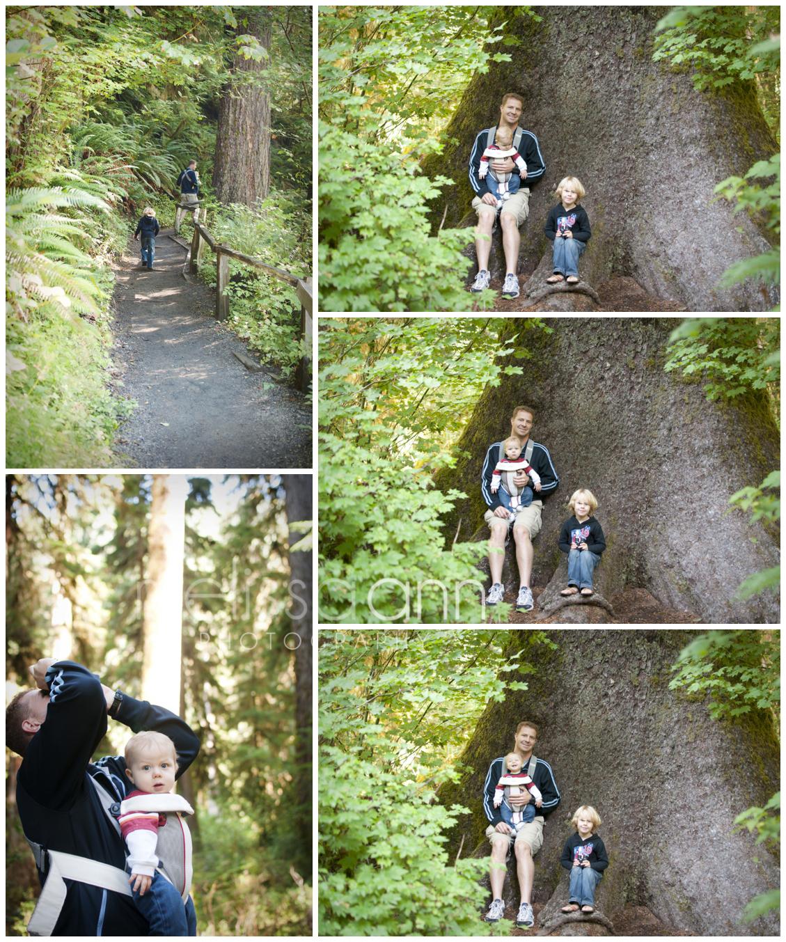 Washington-Olympic-Forest-Photo