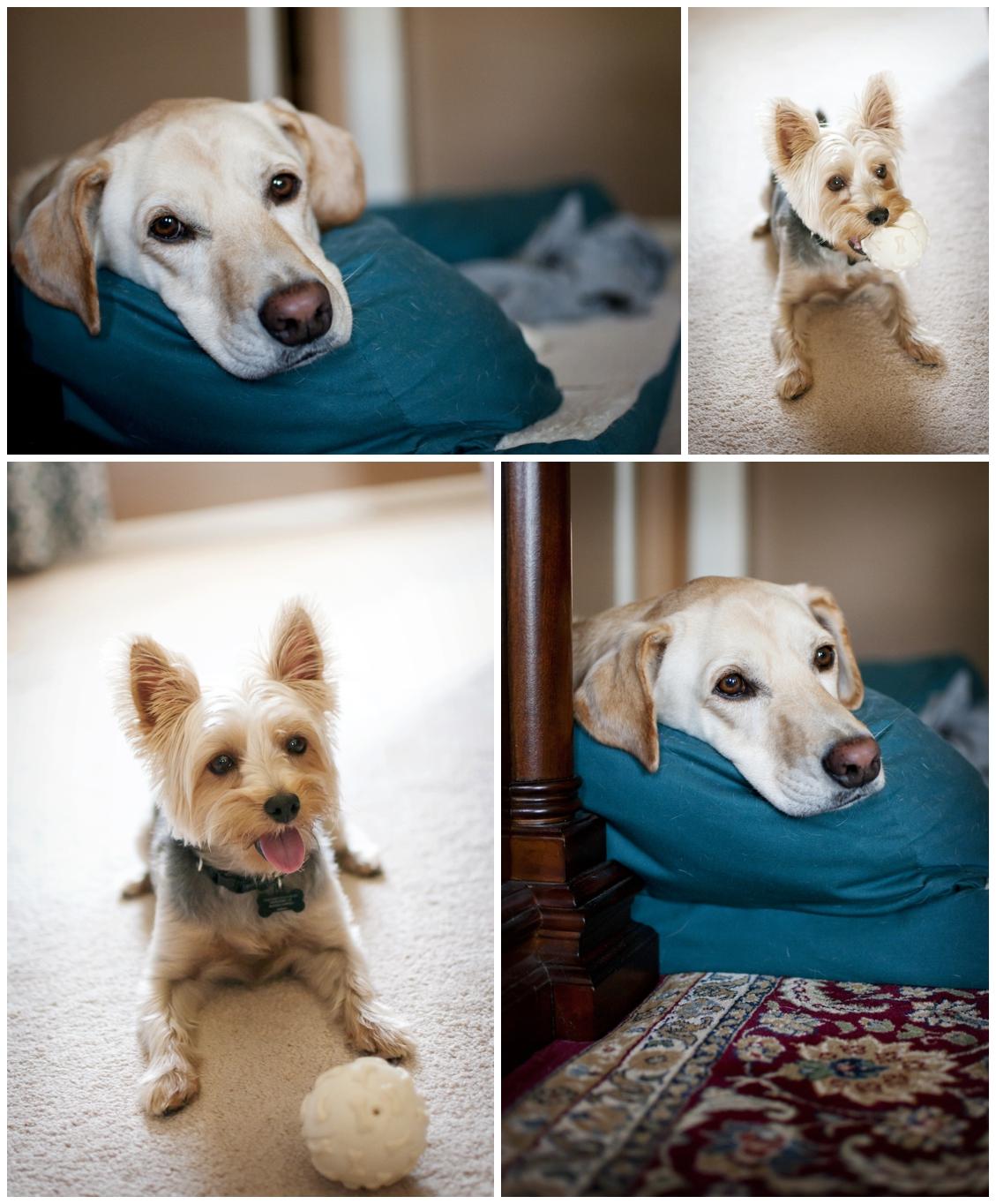 DeRidder-Family-Pets-Photo