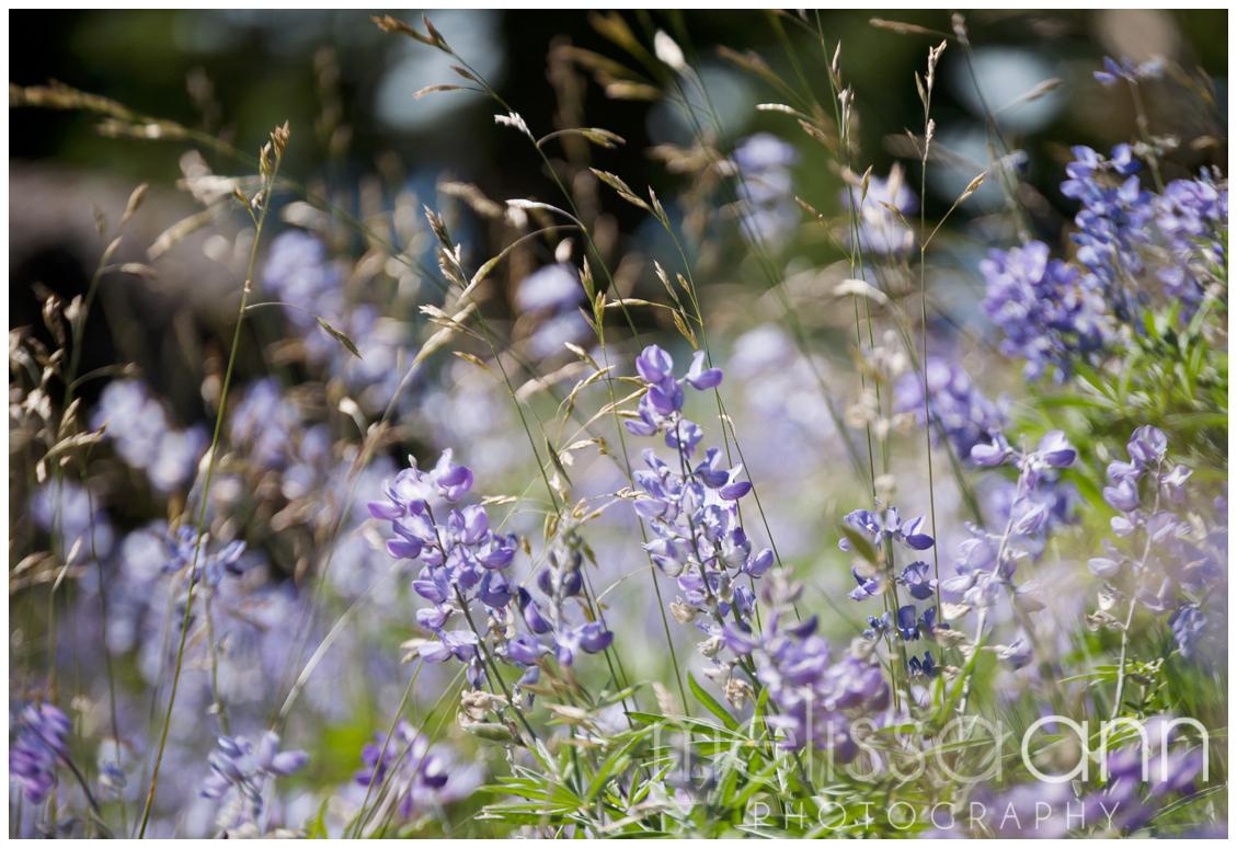 Northwest-Mt. Hood-Flowers-Photo